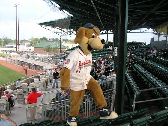 Scout, The Kinston Indians Mascot